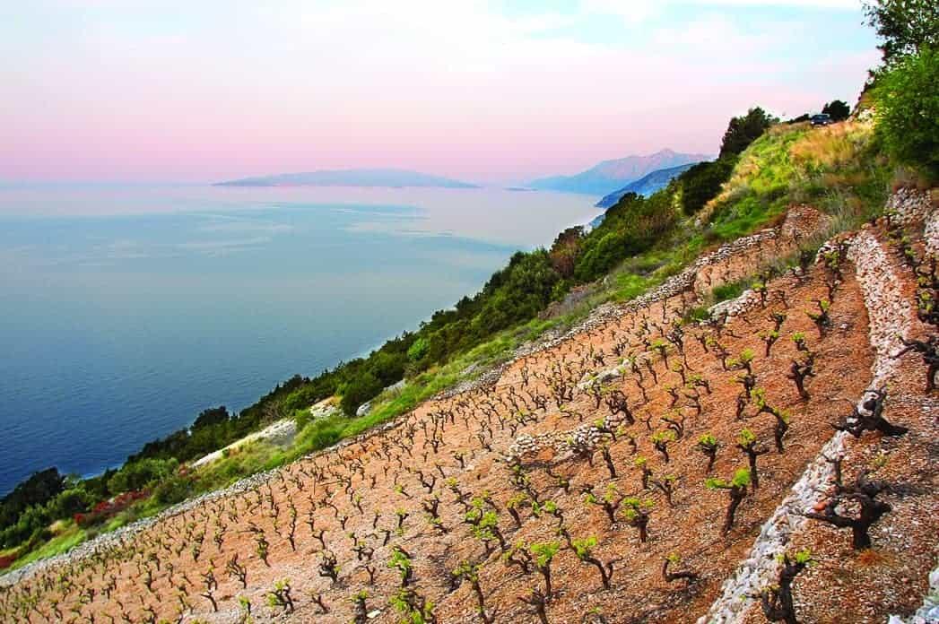 Dingač Vineyards